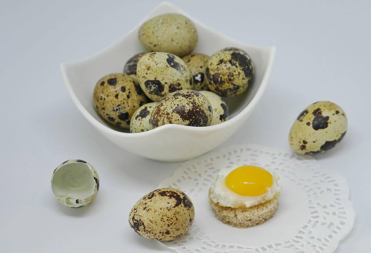 Перепелиные яйца: полезно или вредно их есть?