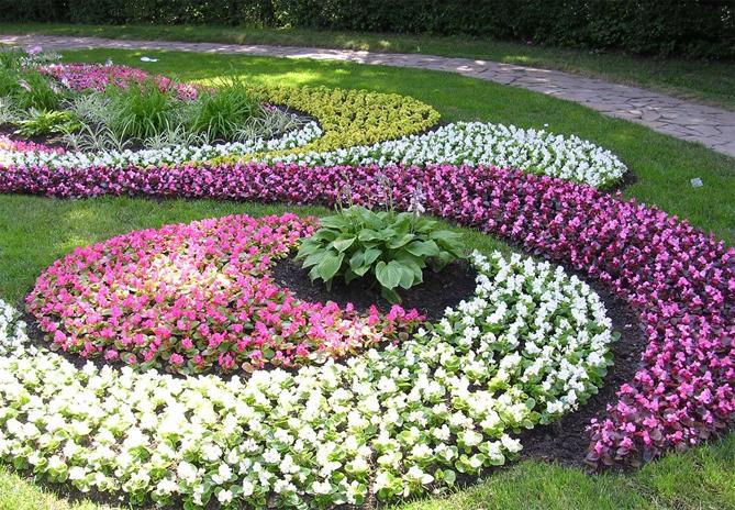 название цветов на клумбе