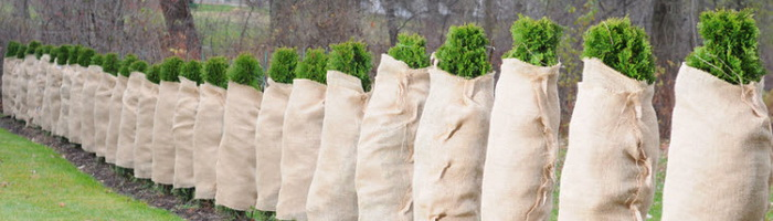 Как правильно укрывать растения на зиму