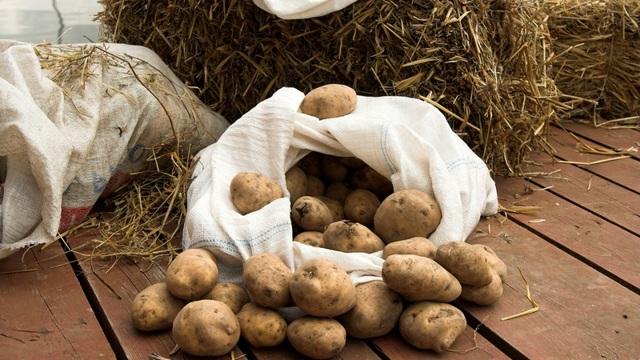 Как хранить картошку в погребе зимой: как правильно уберечь овощ в подвале частного дома, а также когда спускать корнеплоды и температура содержания