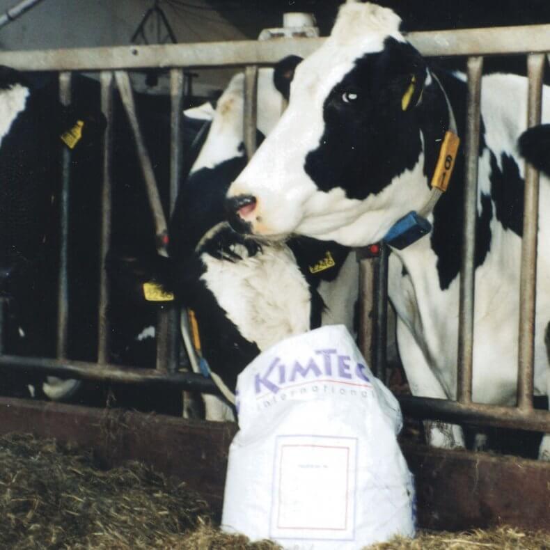 Выращивание бычков на мясо: организационные моменты