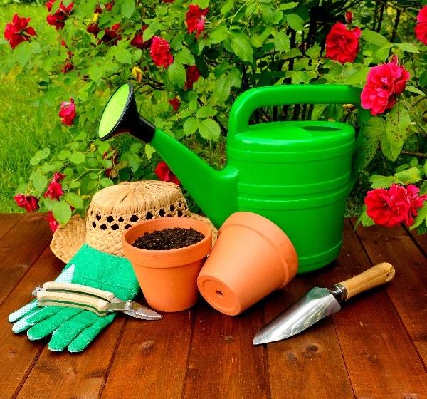 Укрытие роз на зиму, подготовка к зимовке и обрезка роз осенью