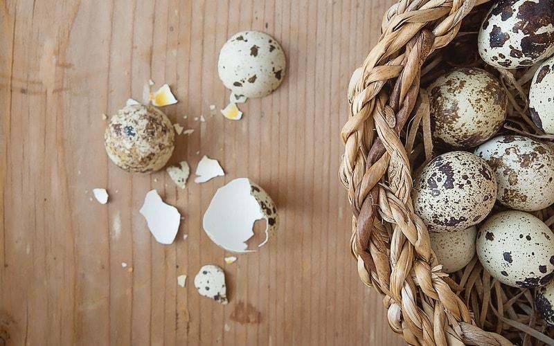 Польза перепелиных яиц для организма в сыром и вареном виде