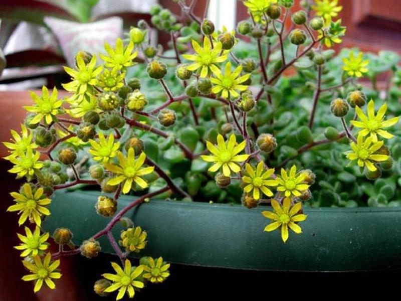 Домашние растения, которые привлекают в дом любовь :: инфониак