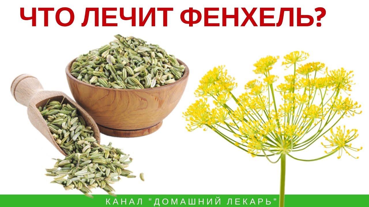Семена фенхеля - полезные свойства и применение