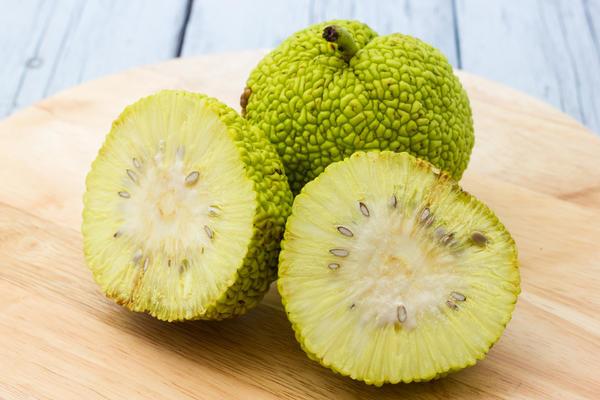 Адамово яблоко: рецепты приготовления и способы лечения, лечебные свойства настойки маклюры