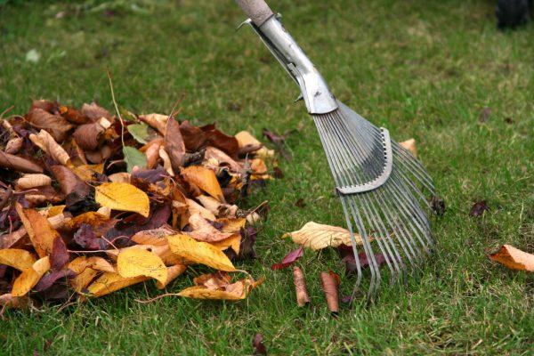 Что делать с опавшей листвой. целесообразно ли сгребать в кучи осенние листья что делать с опавшей листвой. целесообразно ли сгребать в кучи осенние листья