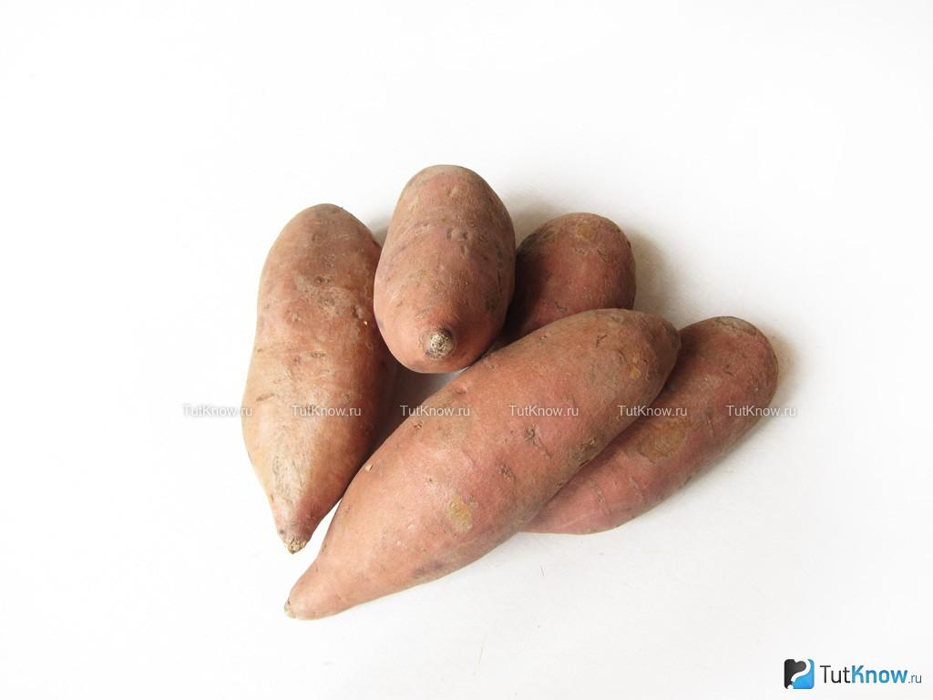 Почему я выращиваю батат и вам советую. выращивание и уход, сбор урожая, сорта, фото — ботаничка.ru