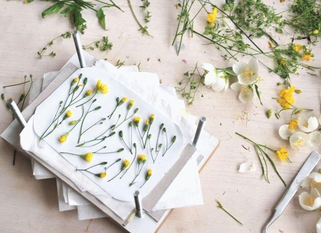 Как сделать гербарий из листьев растений: инструкция и фото