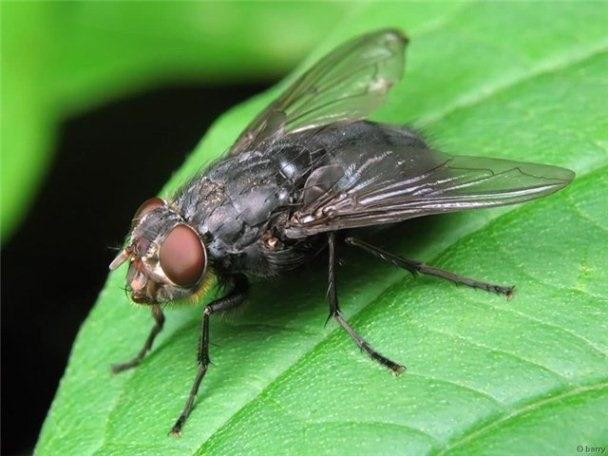 Как избавиться от мух: народные рецепты для спокойного отдыха