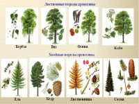 Декоративно-лиственные комнатные растения (48 фото): описание пестролистных цветов, с бордовыми и полосатыми листьями, других