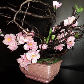 Японская вишня сакура: особенности, значение, описание, сорта, особенности посадки и выращивания, можно ли есть плоды,  листья