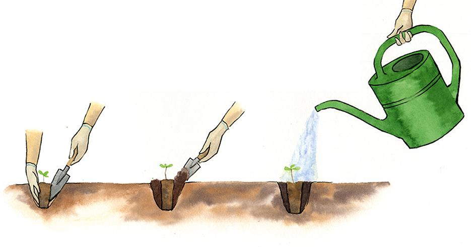 Как вырастить дуб из желудя.