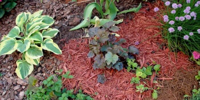 Мульчирование почвы — польза, способы, материалы
