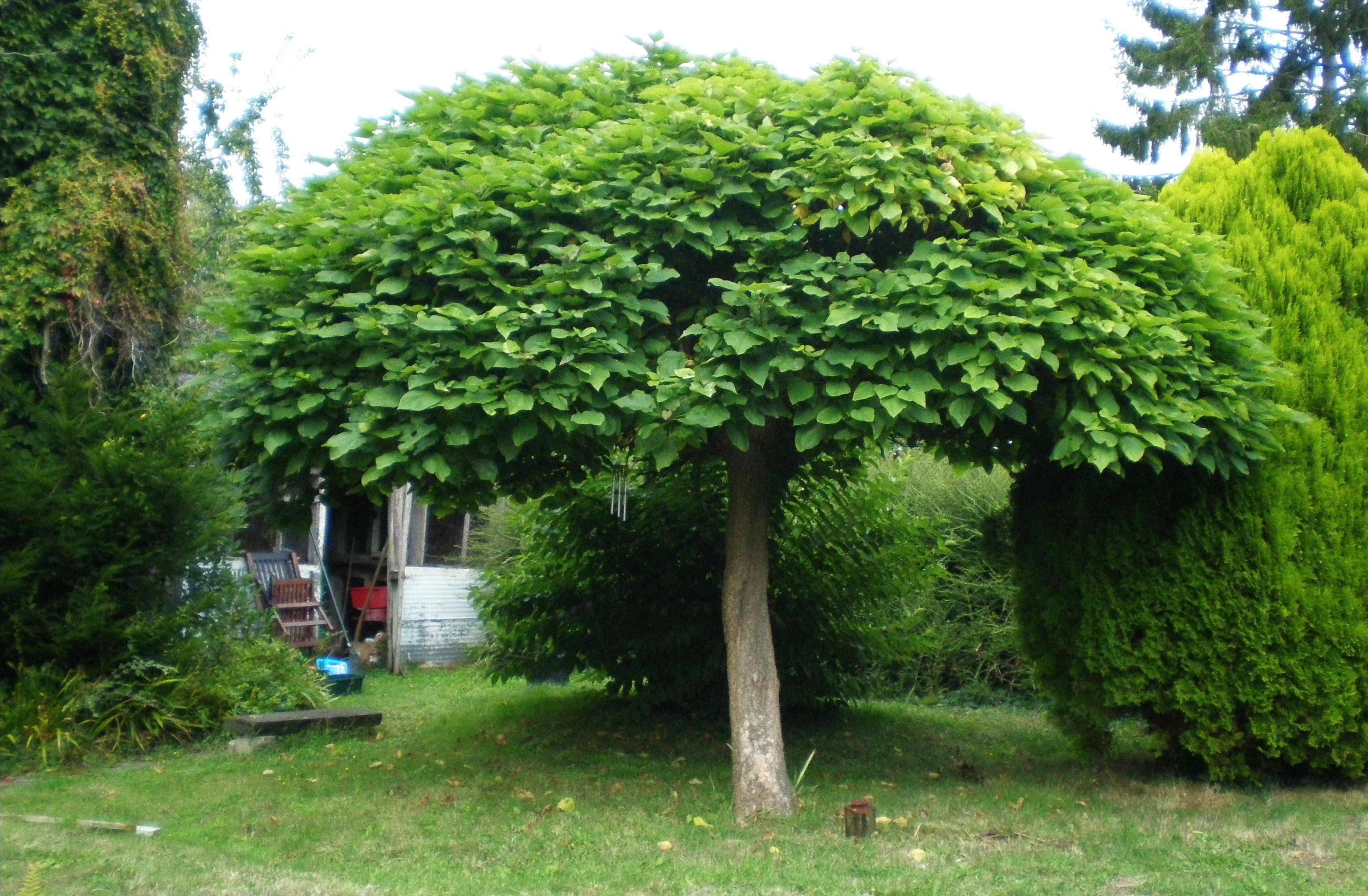 Самые красивые деревья для сада. обзор лучших садовых деревьев. информационный строительный сайт |
