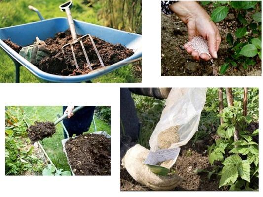 как обработать малину осенью