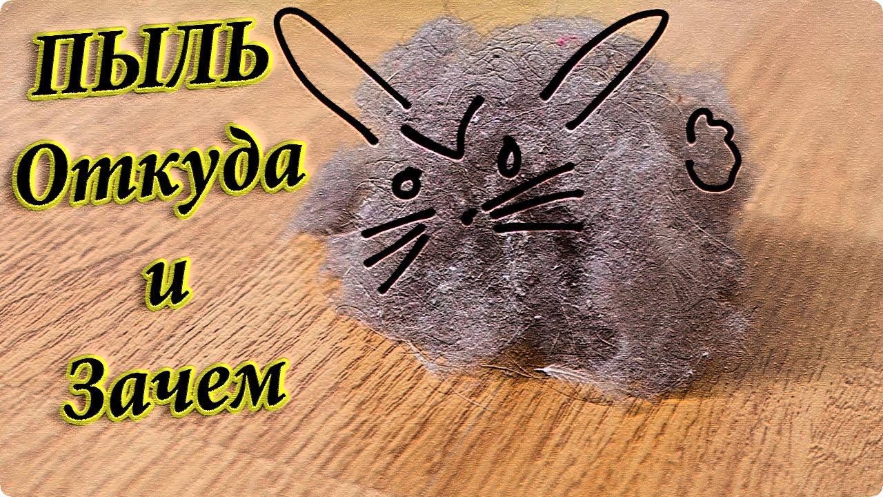 откуда берется пыль в квартире