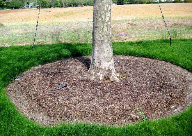 Мульчирование на садовом участке — что это такое и как мульчировать правильно?
