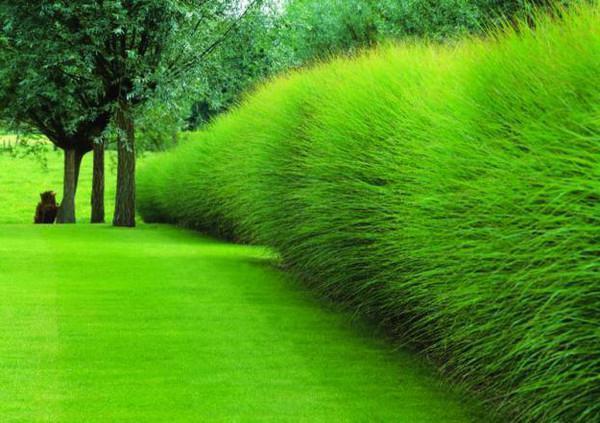 Декоративные травы — названия с 80 фото. травы и злаки для сада