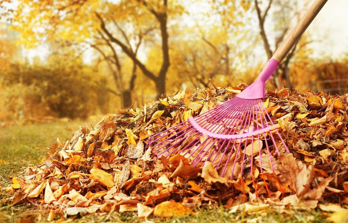 нужно ли убирать листья осенью с газонов