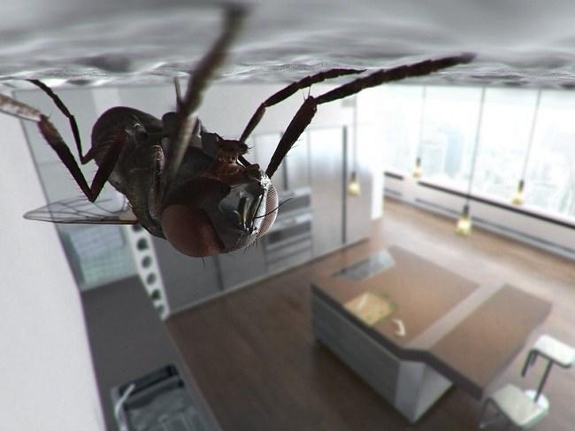 Приметы о мухах в доме зимой или осенью: к чему появляются или залетают