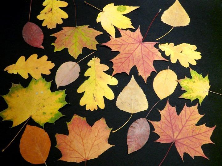 Аппликация из листьев: как сделать красивую композицию из природного материала по шаблону (фото + видео мастер-класс)