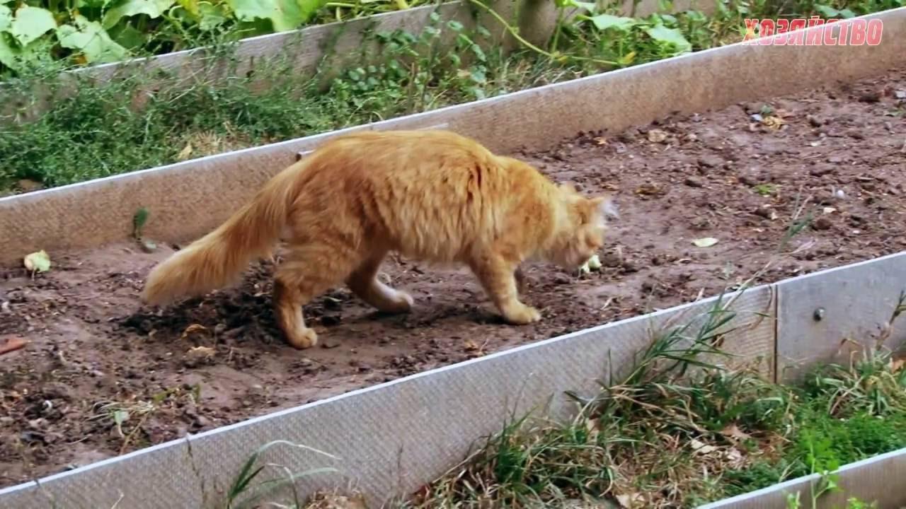Как избавиться от кошачьих меток: способы и средства, чего нельзя делать