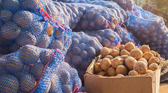 Хранение картофеля зимой в погребе: какая должна быть температура, сколько градусов считается оптимальным, а также другие нюансы правильного сбережения овоща русский фермер