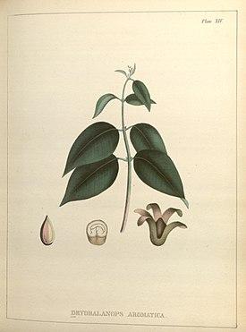 Павловния (paulownia clone in vitro 112)- наиболее перспективный вид сырья