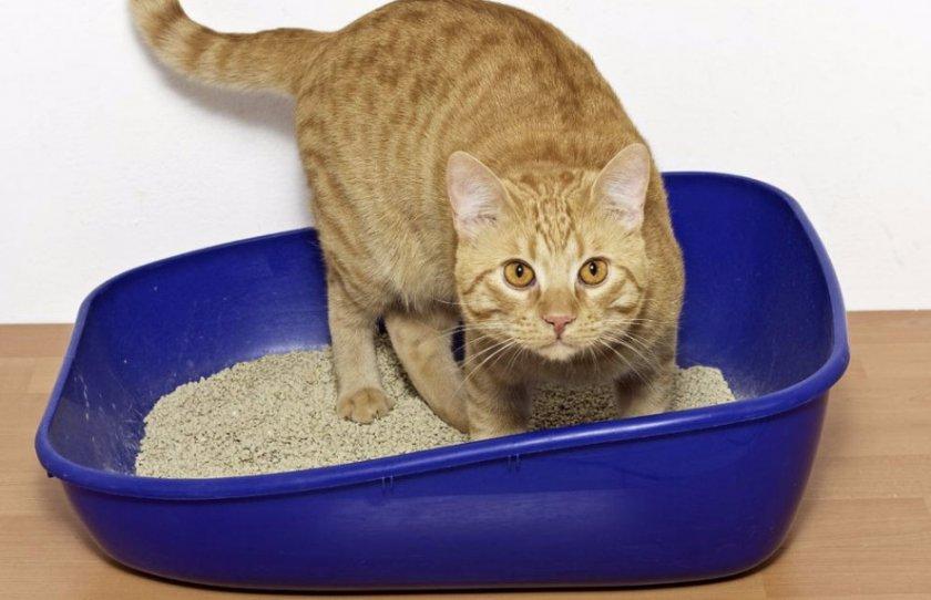 Как правильно пользоваться кошачьим туалетом с решеткой?