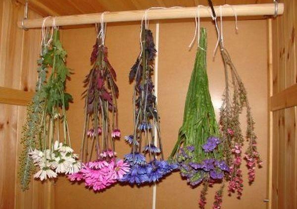 сухоцветы для декора