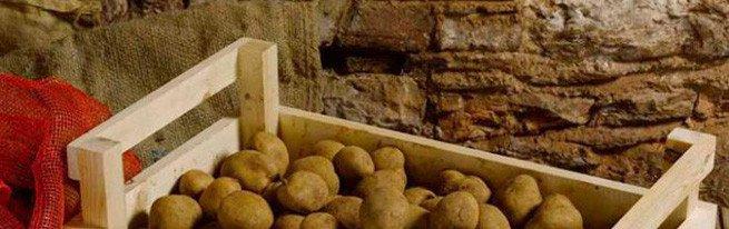 Особенности хранения семенного картофеля в домашних условиях