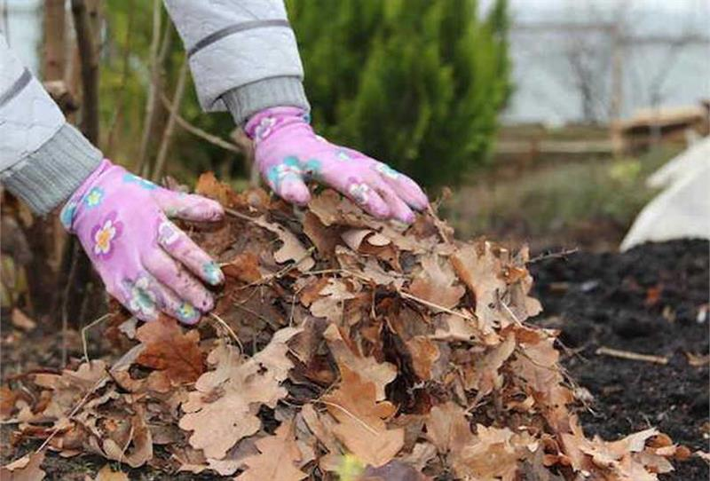 Стоит ли убирать опавшие листья осенью? мнение эксперта