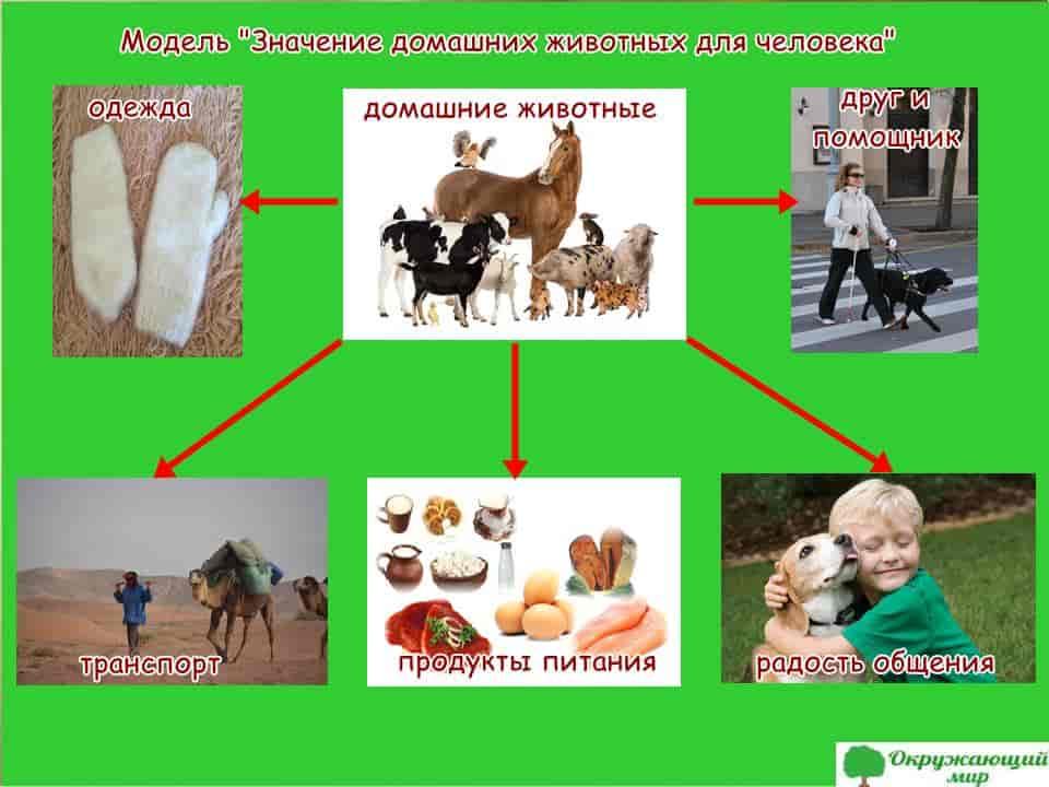 Самые неприхотливые домашние животные: рейтинг для ленивых