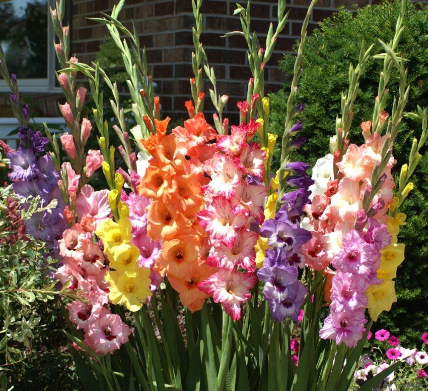 Какие цветы посадить на даче: основы цветоводства для начинающих