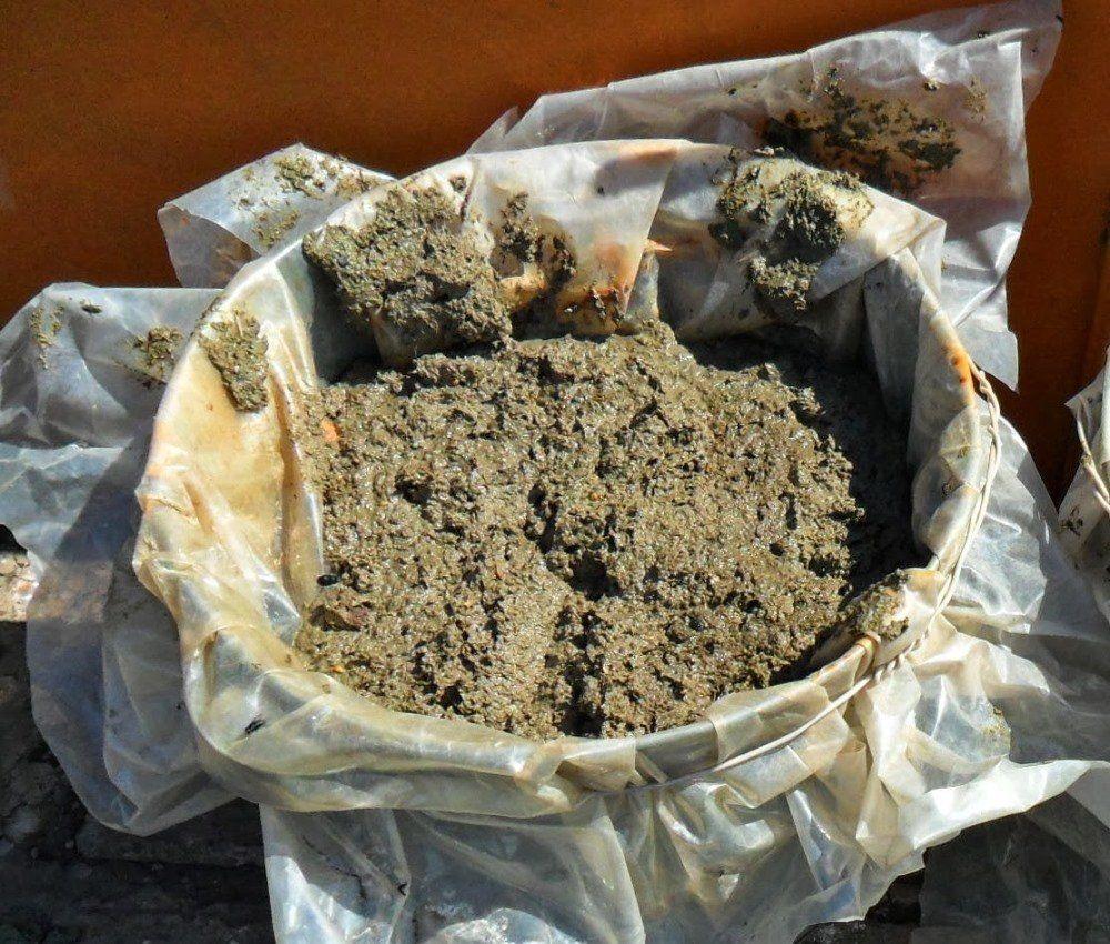Выращивание шампиньонов на даче в открытом грунте