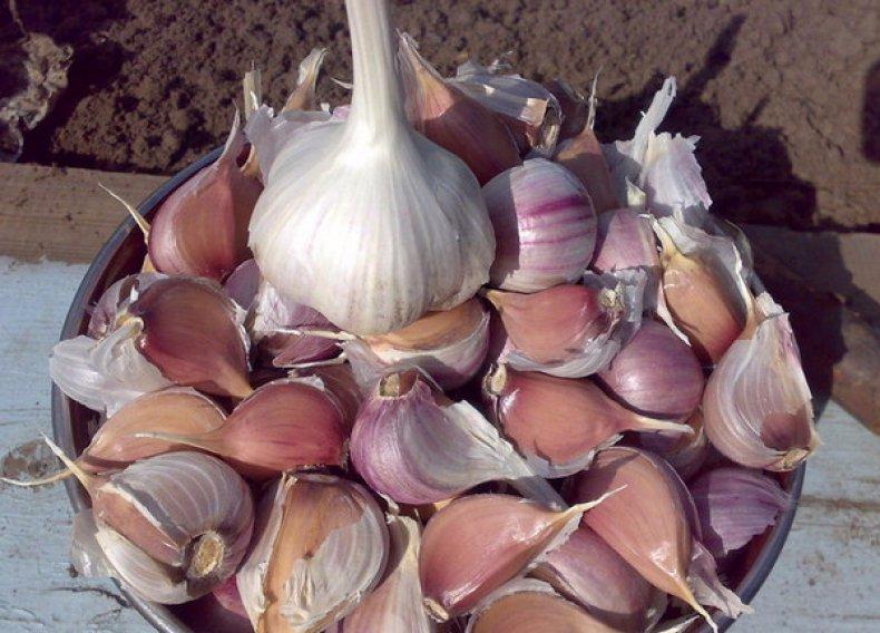 поливают ли чеснок после посадки осенью