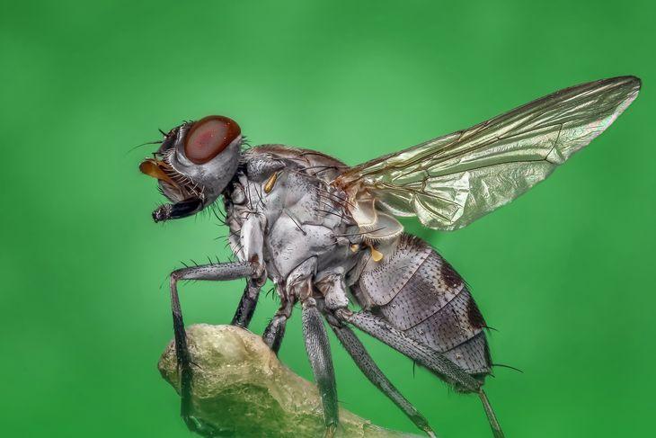 Проблемы с мухами в доме: как избавиться в домашних условиях