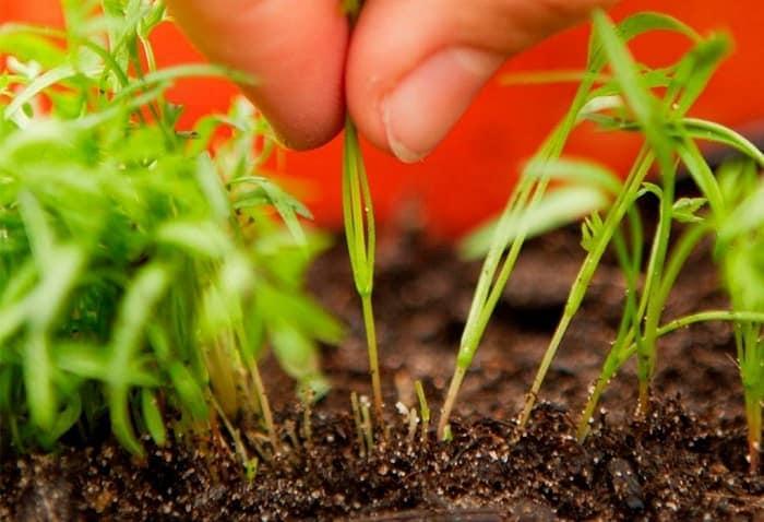 Когда и как вносить калийное удобрение