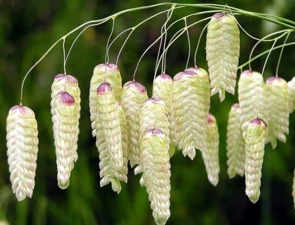 Фото, названия, описание цветов для декоративной композиции букета из сухоцветов своими руками