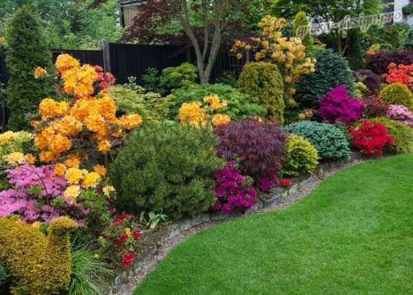 цветы многолетники для сада неприхотливые