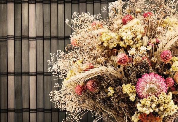 Сухоцветы. фото и видео – дачные дела