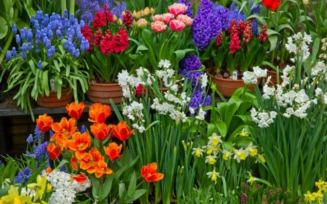 Каталог луковичных цветов: описание 21 сорта (фото) +отзывы