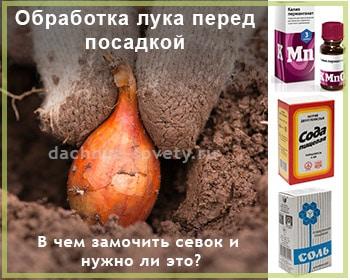 Всё о посадке лука под зиму. плюсы, минусы, сроки, правила. фото — ботаничка.ru