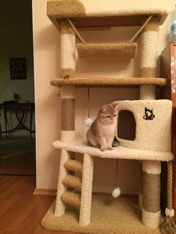 стойка для кошек своими руками