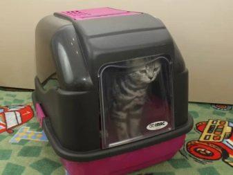 Как грамотно подобрать открытый лоток для кошки