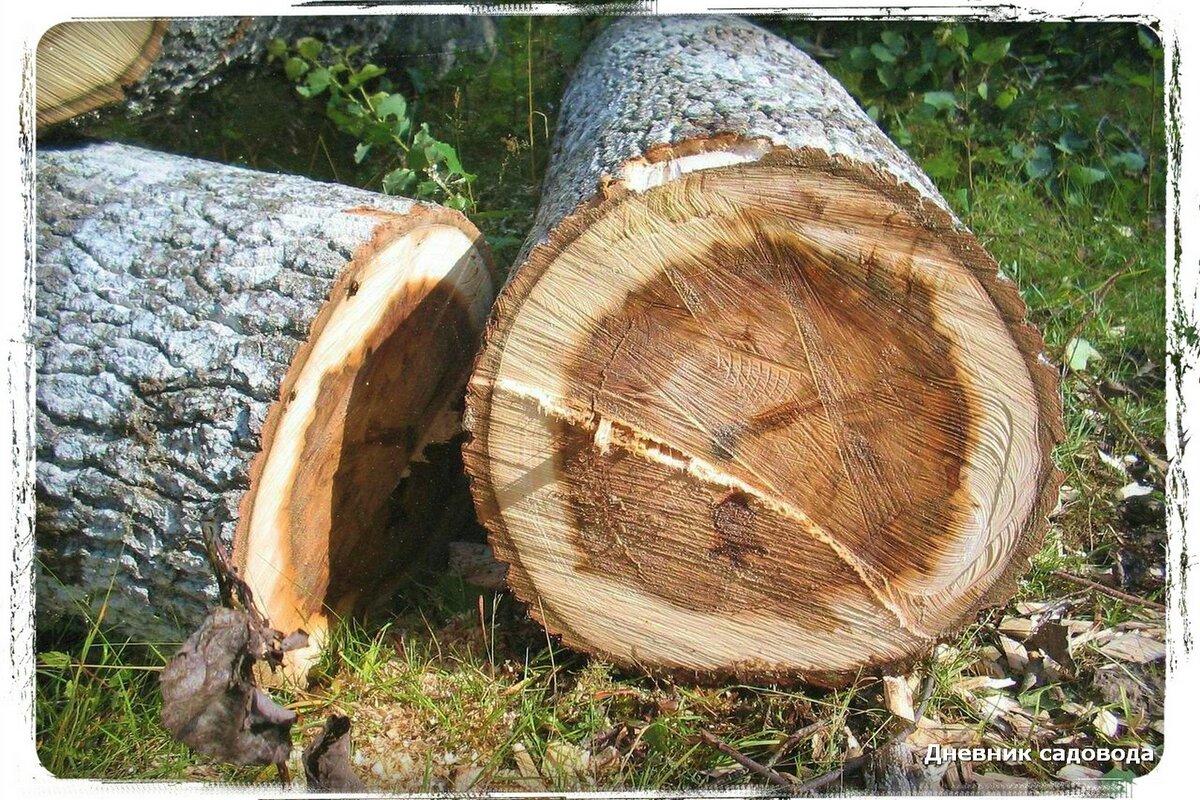 Штраф за спиленное дерево в городе, в лесу или на своем участке: каковы его размеры в разных случаях, а также другие виды наказаний за незаконную вырубку