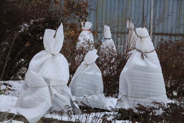 Чем укрыть растения на зиму? наиболее популярные материалы