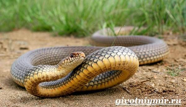 Гадюка обыкновенная: как узнать ядовитую змею, что делать при ее укусе
