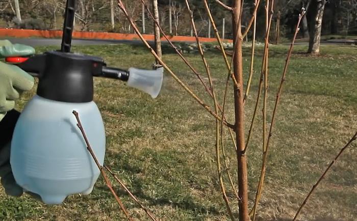 Когда опрыскивать деревья и кустарники весной от вредителей – сад и огород своими руками